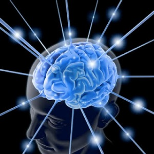 bigstockphoto_The_Brain_1713803